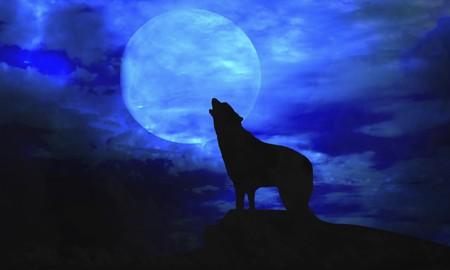 lobo-luna-llena