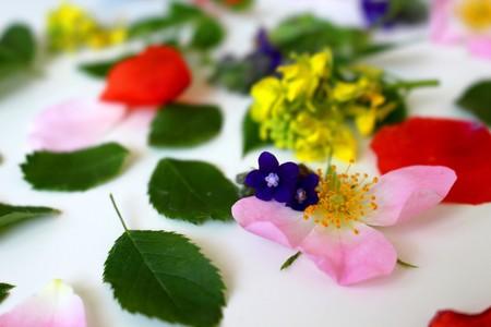bach-flores-pseudoterapia