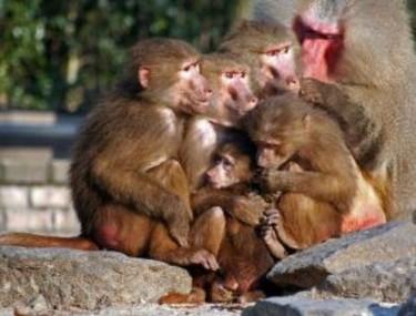 Los planes de parto y la teoría del centésimo mono
