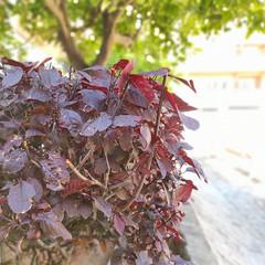 Foto 9 de 35 de la galería xiaomi-redmi-note-9-pro-galeria-fotografica en Xataka