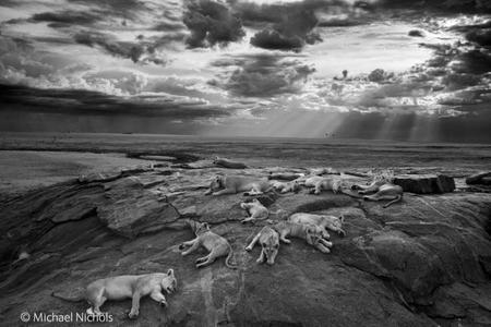 Wildlife Photographer of the Year 2014: un joven español entre los ganadores