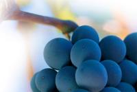 El poder depurativo de las uvas
