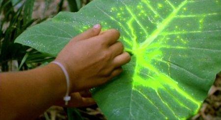 ¿Por qué creemos que el material radioactiva es verde y brilla en la oscuridad?