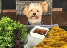 La nueva estrella 'foodie' de Instagram es... ¡un perro! (y le declaramos nuestro amor eterno)