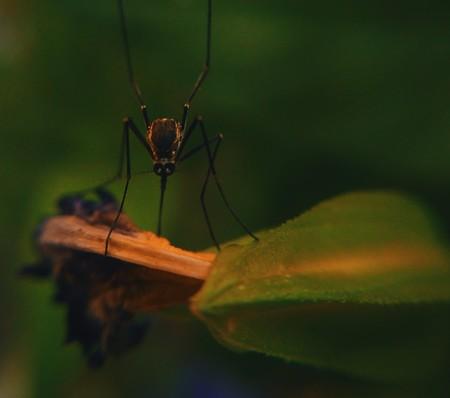 """Ni repelentes, ni modificación genética, ni venenos: estos señuelos """"caseros"""" son increíblemente eficaces contra los mosquitos"""