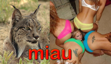 Nombre para Ubuntu 10.04: Lucid Lynx