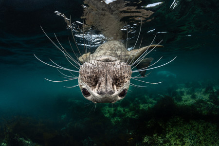 Cold Water Greg Lecoeur Grey Seal