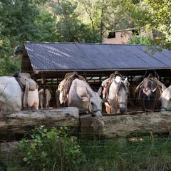 Foto 5 de 8 de la galería sony-a9 en Xataka Foto