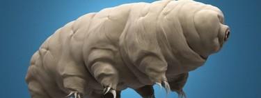 Incluso los casi invulnerables tardígrados serán víctimas del calentamiento global