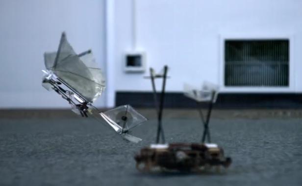 Así de espectacular es ver una cucaracha robótica lanzando a un insecto volador también robot