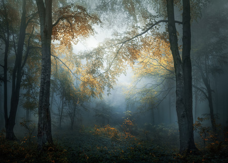 Early Autumn, de Veselin Atanasov