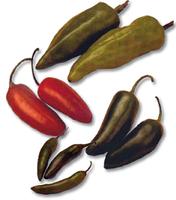 Descubren chiles mexicanos de hace 1.500 años