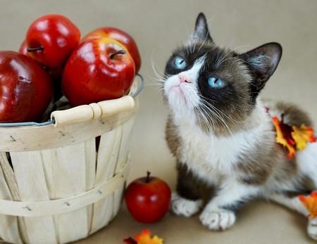 Internet pierde a su musa felina: Grumpy Cat muere a los 7 años de edad