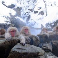 Parque de los macacos de Jigokudani, cerca de Nagano