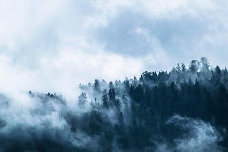 Plantar más árboles podría ser una estrategia muy ineficaz para combatir el cambio climático