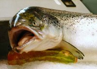 ¿Un salmón? Son diez mil