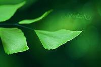 Piel luminosa con té verde