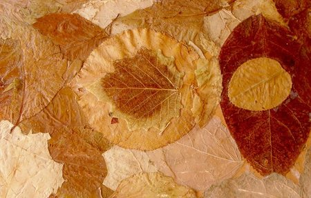 hojas árboles
