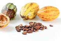 Los genes del cacao al descubierto