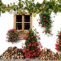 Cómo crear un jardín en casa para alimentar a las abejas y ayudar al medio ambiente