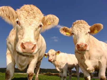 Lidl garantizará el bienestar animal y el pasto al aire libre de toda su producción de leche fresca