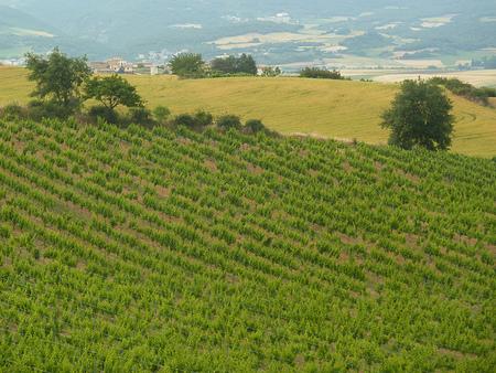 Miradores y senderos interpretativos en la Ruta del Vino de Navarra
