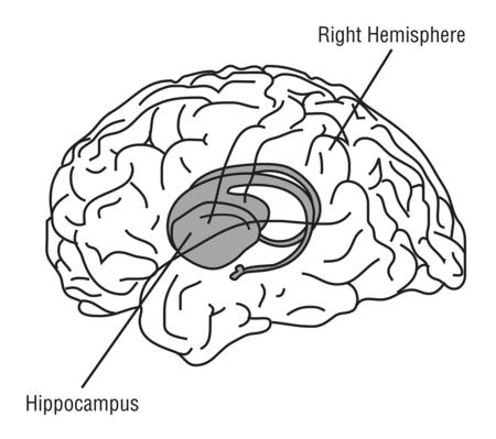 Hippocampus 148151 1280