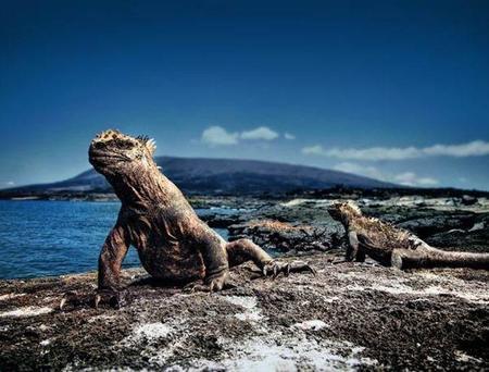 Fundación Charles Darwin e IWC Schaffhausen protectoras de la flora y la fauna de Galápagos