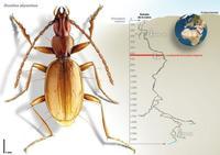 Una nueva especie de escarabajo se encuentra en la cueva más profunda del mundo