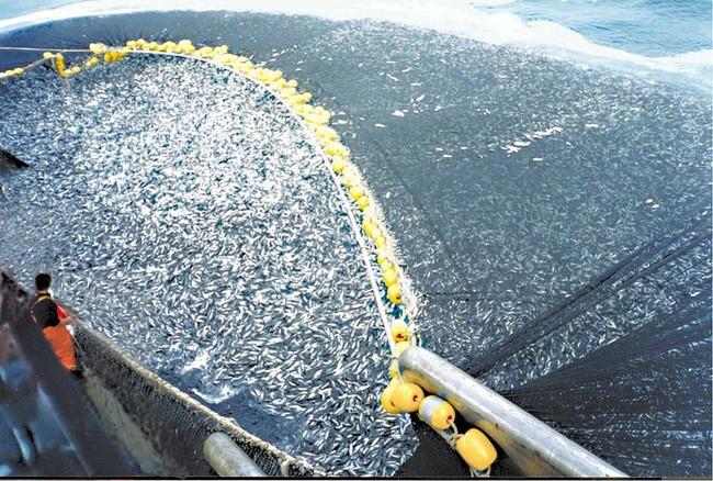 Trawlers Overfishing Cod