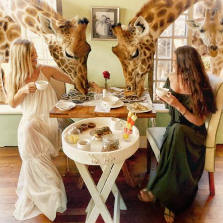 En este hotel el safari empieza a la hora del desayuno