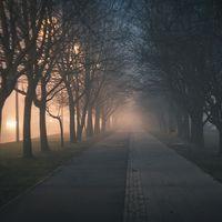 En las ciudades, los árboles se desarrollan a otra velocidad: más deprisa