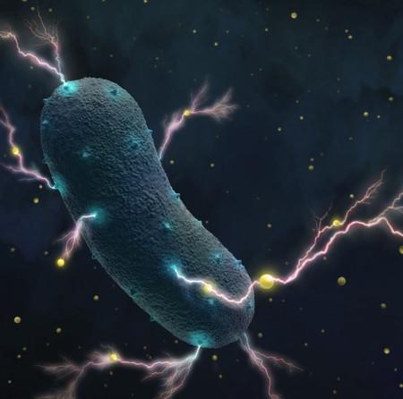 Las bacterias de nuestro estómago también pueden producir electricidad
