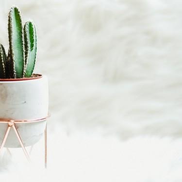 8 originales ideas para decorar con plantas ¿Con cuál te quedas?