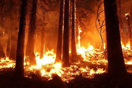 Wildfire 1105209 960 720