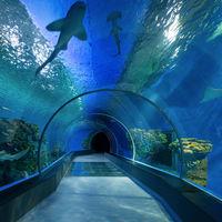 El control de seguridad del aeropuerto en Dubái será como un acuario, con 80 cámaras