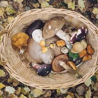 El consumo de hongos podría ser de ayuda para prevenir el deterioro cognitivo leve asociado a la edad