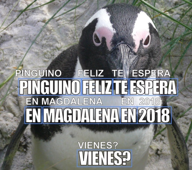 Codeblog Penguin Spanish