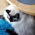 ¿Compartes hogar con un gato? Haz que tu casa sea su paraíso con estas propuestas de Pinterest