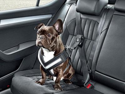 Škoda ya tiene su propio arnés de seguridad para perros, entre otros accesorios