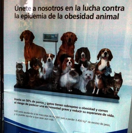 epidemia mascotas