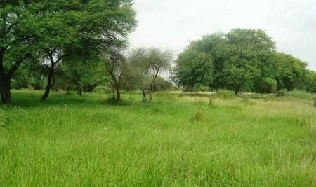 Banni Grasslands Reserve Ba67f3a2 1d0b 46d1 9447 087ec4fcef8 Resize 750