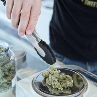 Más consumo, más cultivo: la industria del cannabis ha encontrado una oportunidad en el coronavirus