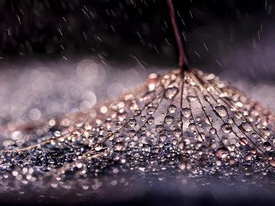 Las diminutas gotas de agua en las preciosistas macrofotografías de Ivelina Blagoeva