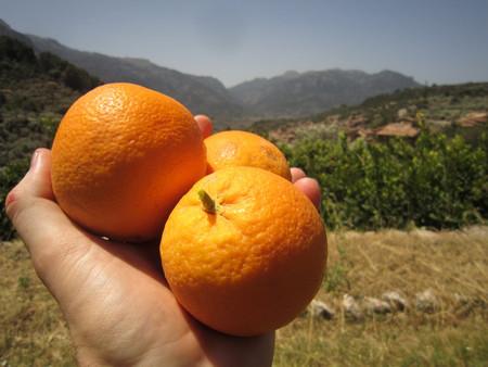 Naranjas de Sóller Mallorca
