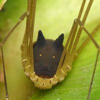 No es una araña ni un perro, aunque lo parezca: es un murgaño