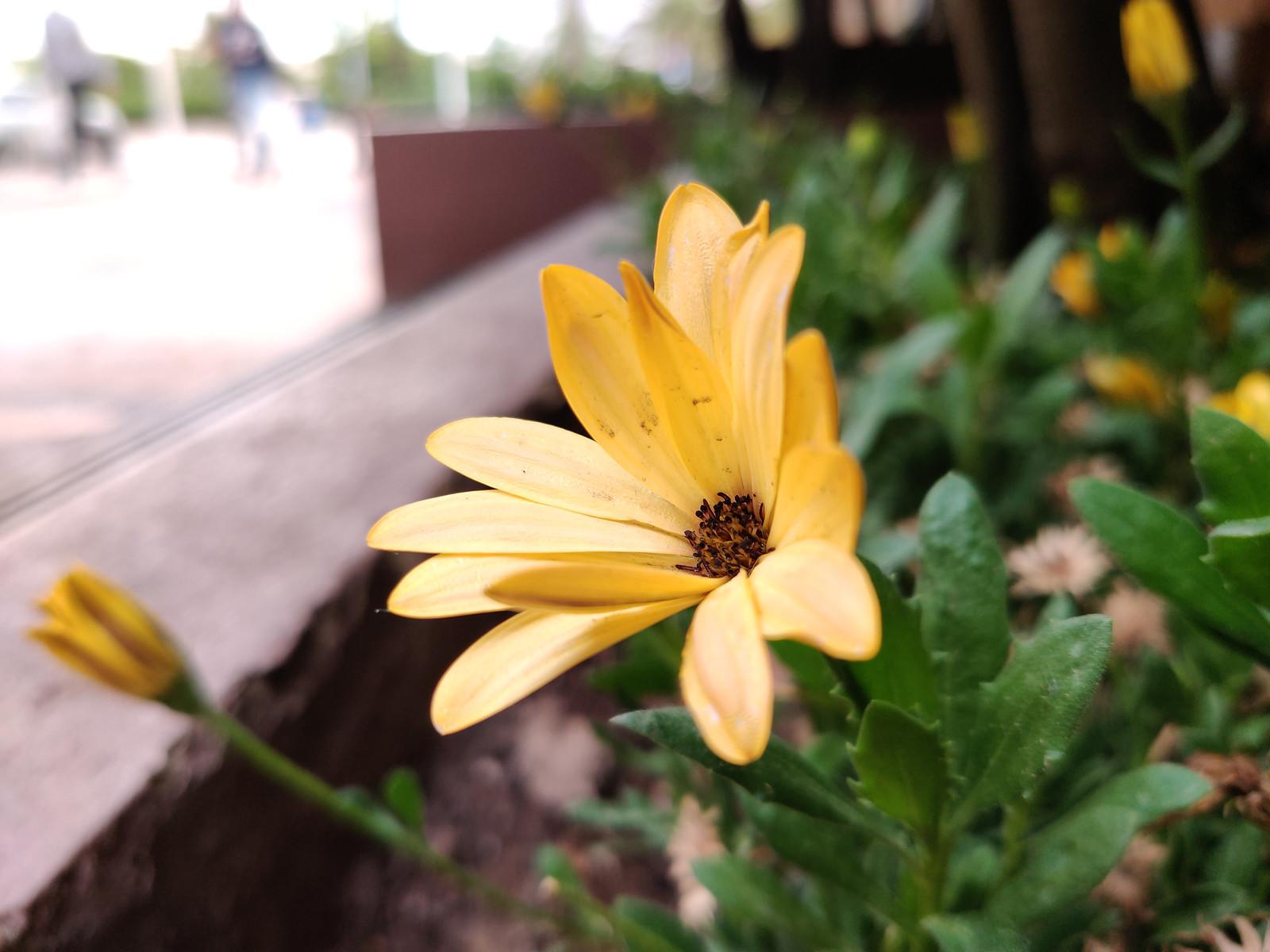 OnePlus 7, galería fotográfica