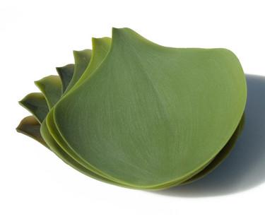 Platos enrollables que parecen hojas