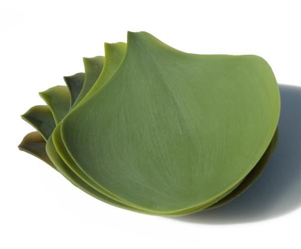 Platos enrollables que parecen hojas - Donde comprar vajillas ...