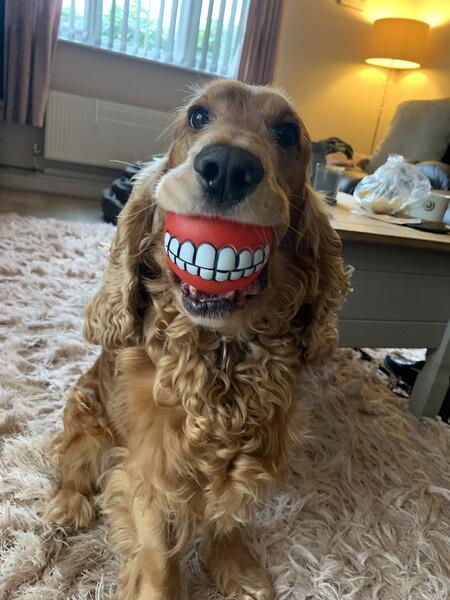 Lianne Richards Buddys New Teeth 00001502
